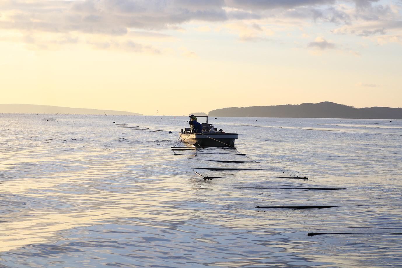 海苔網を船に引き上げる様子