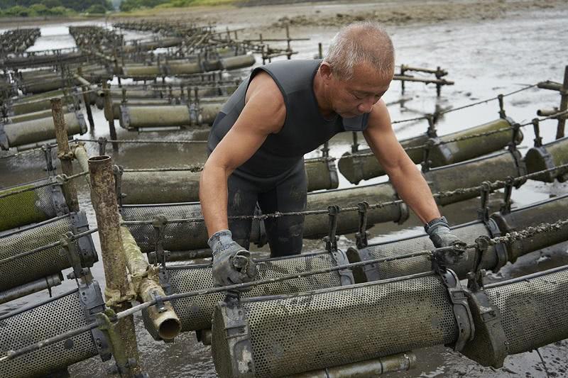 牡蠣の養殖カゴを養殖棚から外す姿