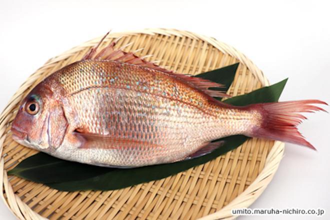 「タイ」と名のつく魚は多けれど、本物のタイは一部だけ?