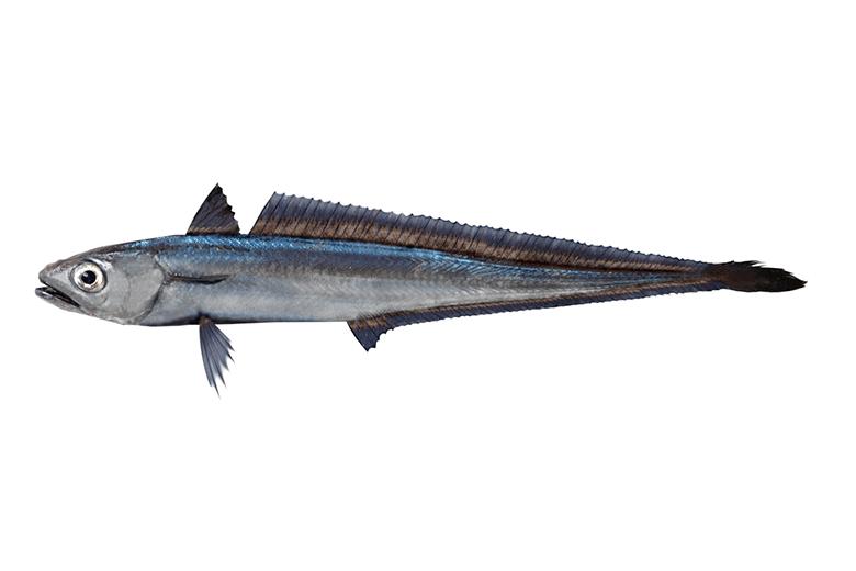 フライの中身の白身魚を数字から調べてみた