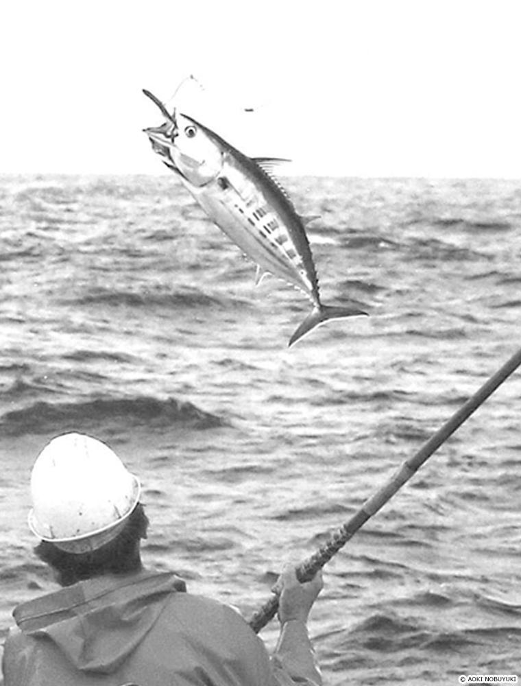 一本釣りの様子