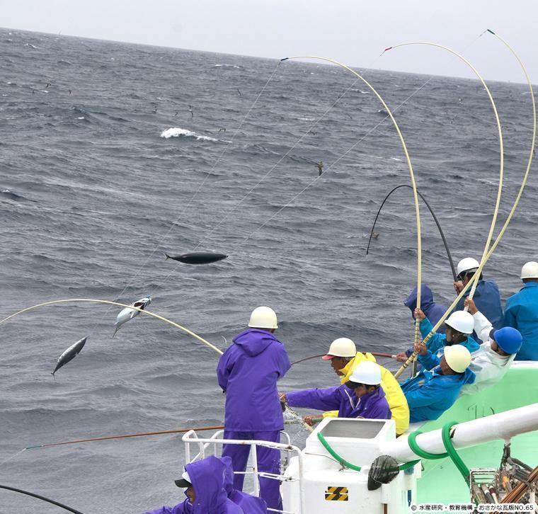 カツオ一本釣り漁の様子