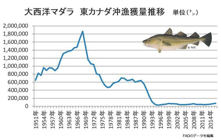 大西洋マダラ 東カナダ沖漁獲量推移のグラフ。1960年代後半に180万トンあったものが1970年代中盤には60万トン程度まで落ち込んでいる。