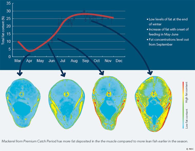 鯖の断面図と月ごとの脂肪割合を示すグラフ