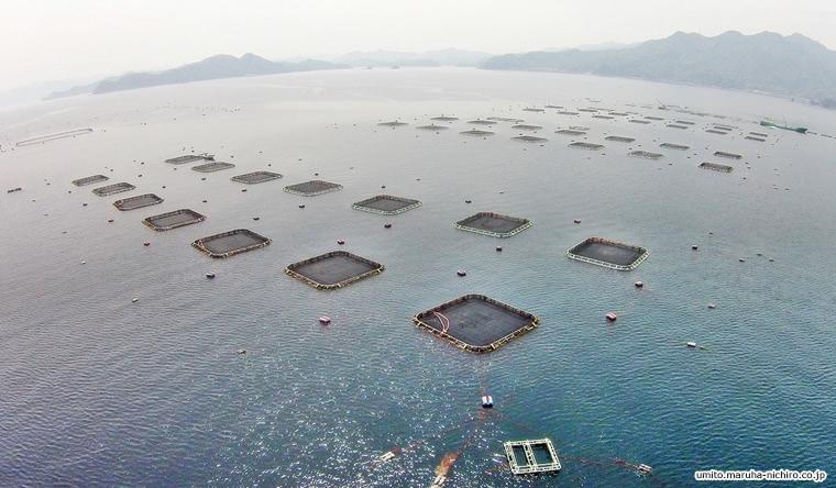 湾内に設置された養殖の生け簀