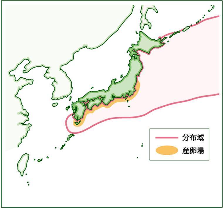 関東から九州にかけての太平洋側沿岸が産卵場(太平洋系群)