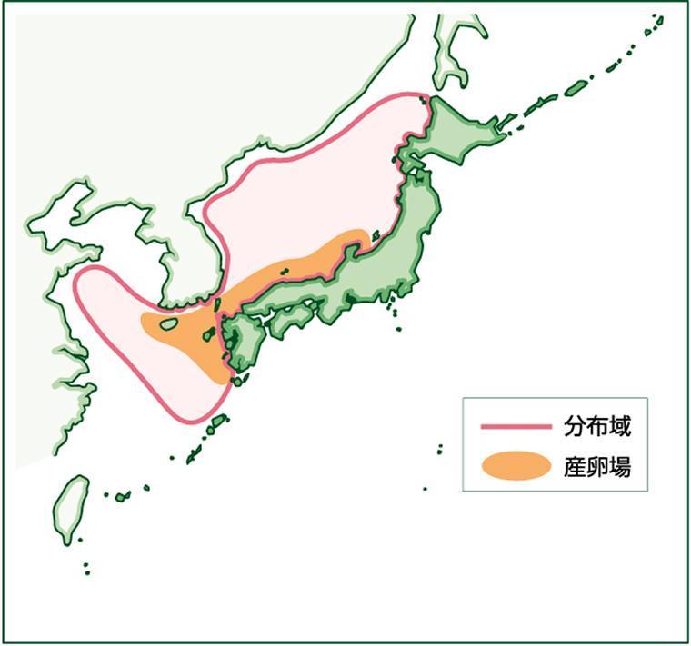 対馬暖流系群のイワシは対馬から新潟にかけての日本海沿岸が産卵場