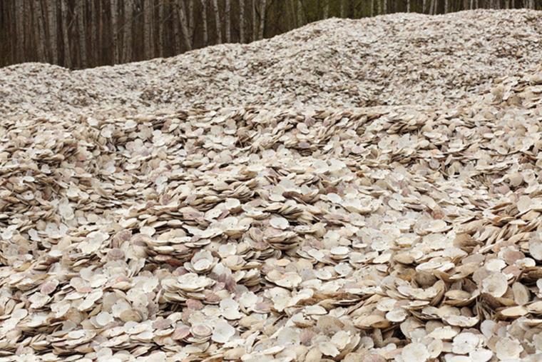 ホタテの貝殻の山