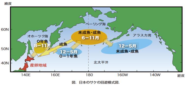 日本のサケの回遊模式図