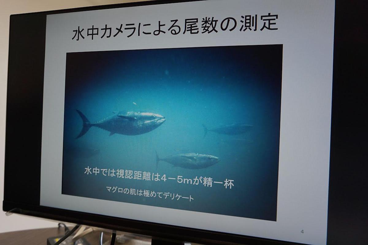 「水中カメラによる尾数の測定」という資料が映されたPC画面