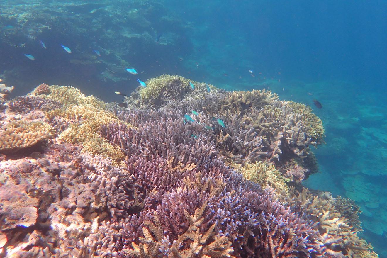 【写真で見る】サンゴが見られなくなるのはなぜ?