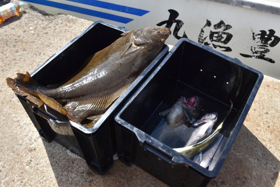 カゴに魚がいっぱい