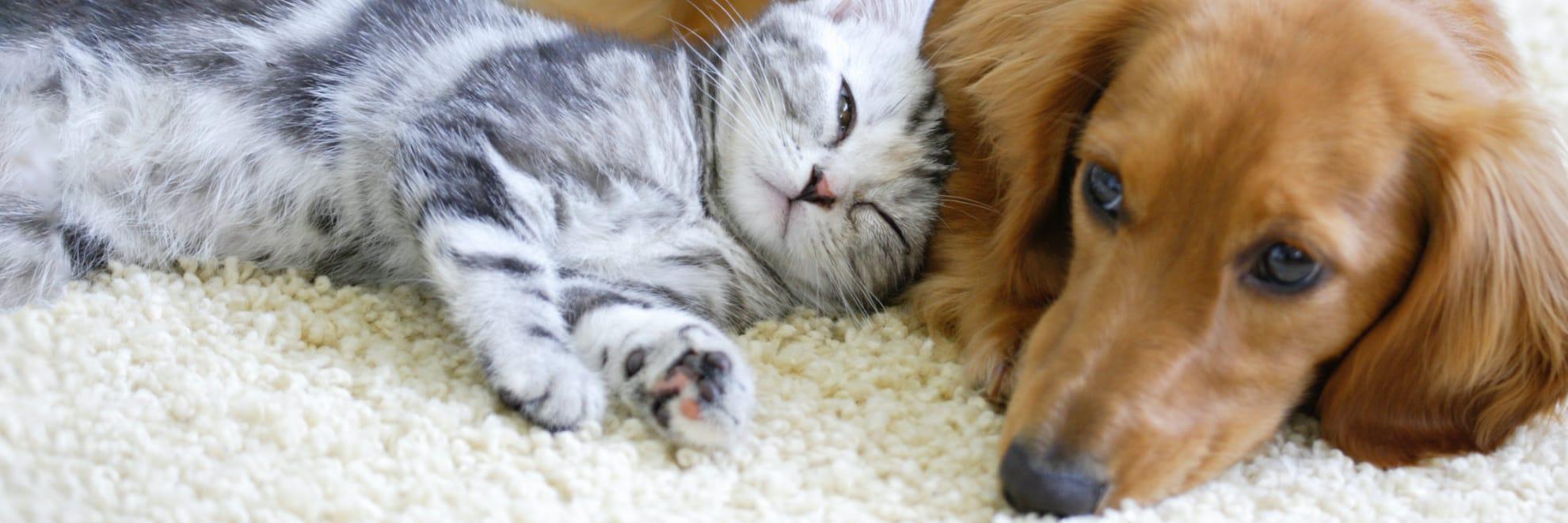 動物・ペットの画像