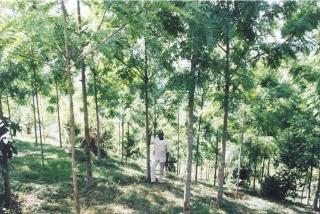 植林によってキリマンジャロ山に蘇った森
