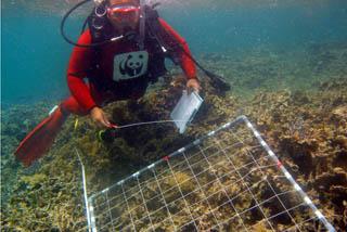 2002年からサンゴの健康調査を実施