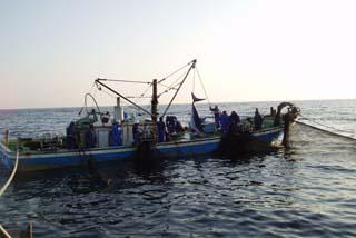 漁師の網にかかったアオザメ