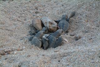 [産卵・発生環境(砂浜)保全プロジェクト]の画像