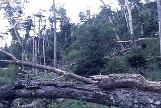 台風被害から10年後の自然林 まだまだ再生には時間がかかります