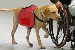 [介助犬・聴導犬を広めよう募金]の画像