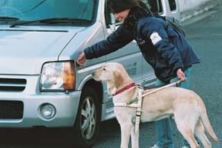 盲導犬の訓練風景