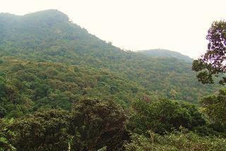 [地球にもっと森を]の画像