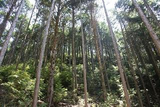 [日本の森を元気にしよう!]の画像