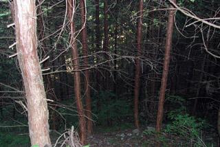 手入れが進んでいないので、日も差さず、暗い森に