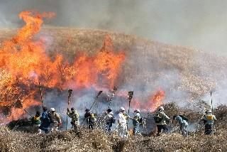 [阿蘇千年の草原を守る野焼き支援 ]の画像