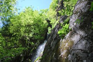 水のトラスト地を水源とするムジナ沢の美しい滝