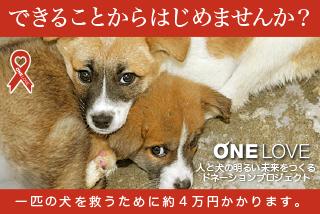 犬の殺処分をなくすために。できることからはじめよう ONE LOVE
