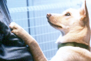 [保護犬を聴導犬・介助犬に育てる募金]の画像