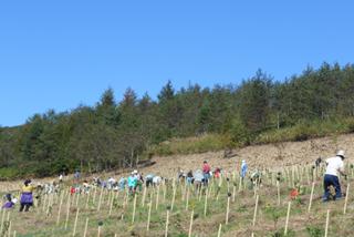 都市部からの参加者と市民参加者が一緒になって、約1000本の植樹をしました。(2012年10月)
