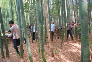 放置竹林の整備を行う参加者たち