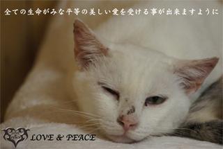 LOVE&PEACE Pray