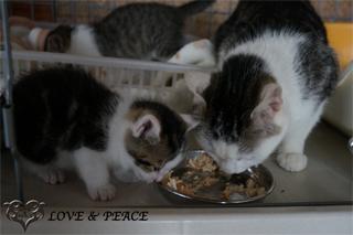 保護施設ガーデンで新しい飼い主さんとの出逢いを待つ猫達。