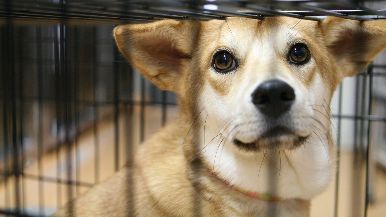 行政に収容された犬や猫に必要な医療を受けさせ里親を見つけたい