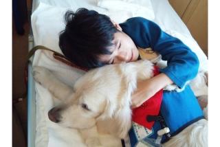 ファシリティドッグは、子ども達にとっては「犬」ではなく、病気を一緒に闘う「しっぽの生えた仲間」