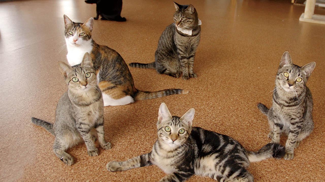 道東初の保護型猫カフェで、北の猫たちを救いたい!