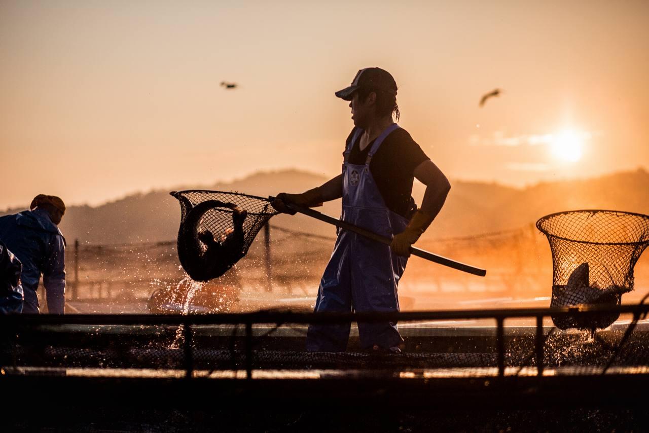 [東北で漁業を誇れる職業に変え、減り続ける日本の漁師を増やしたい]の画像