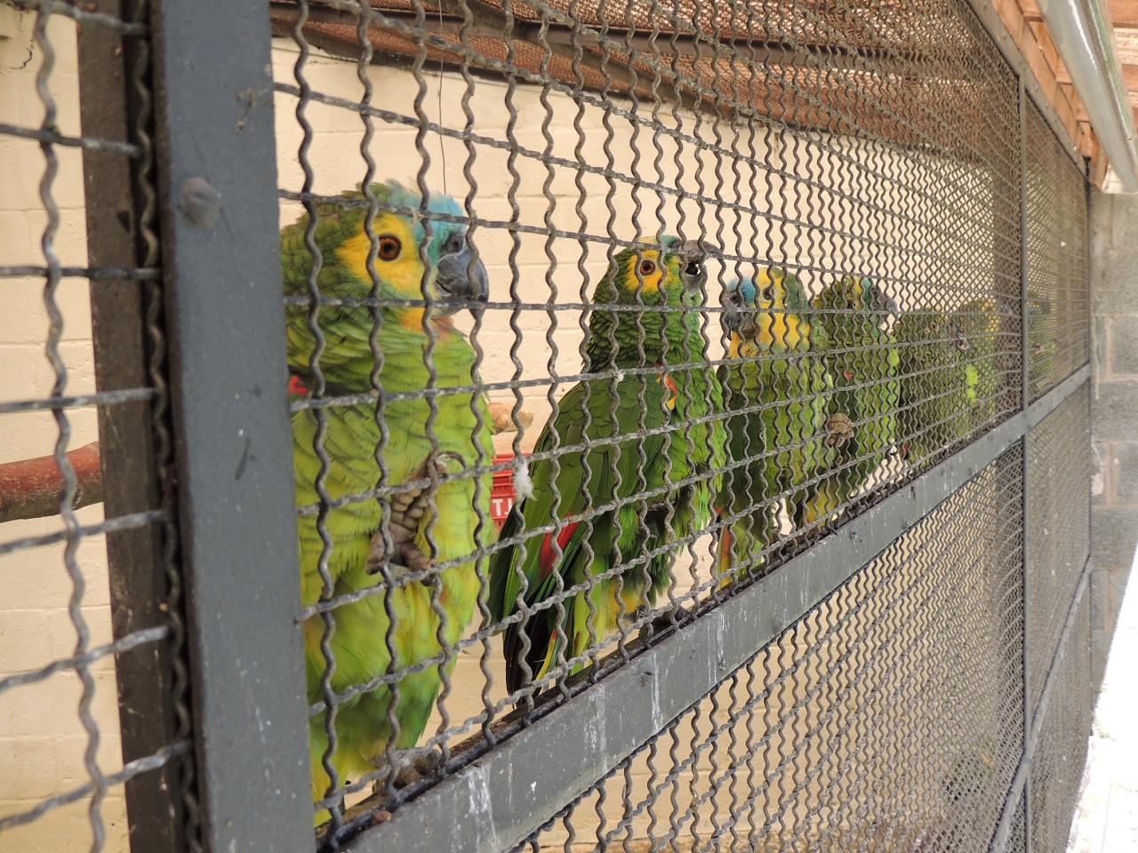 [ブラジルで保護された鳥たちの野生復帰にご協力ください]の画像