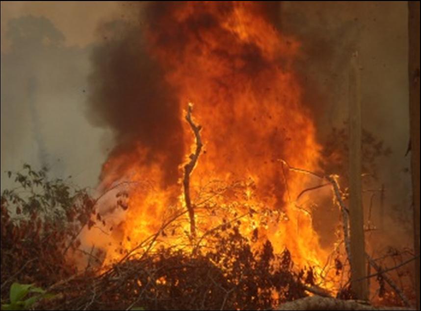 スマトラ島の大規模森林火災から森と生き物を救ってください!