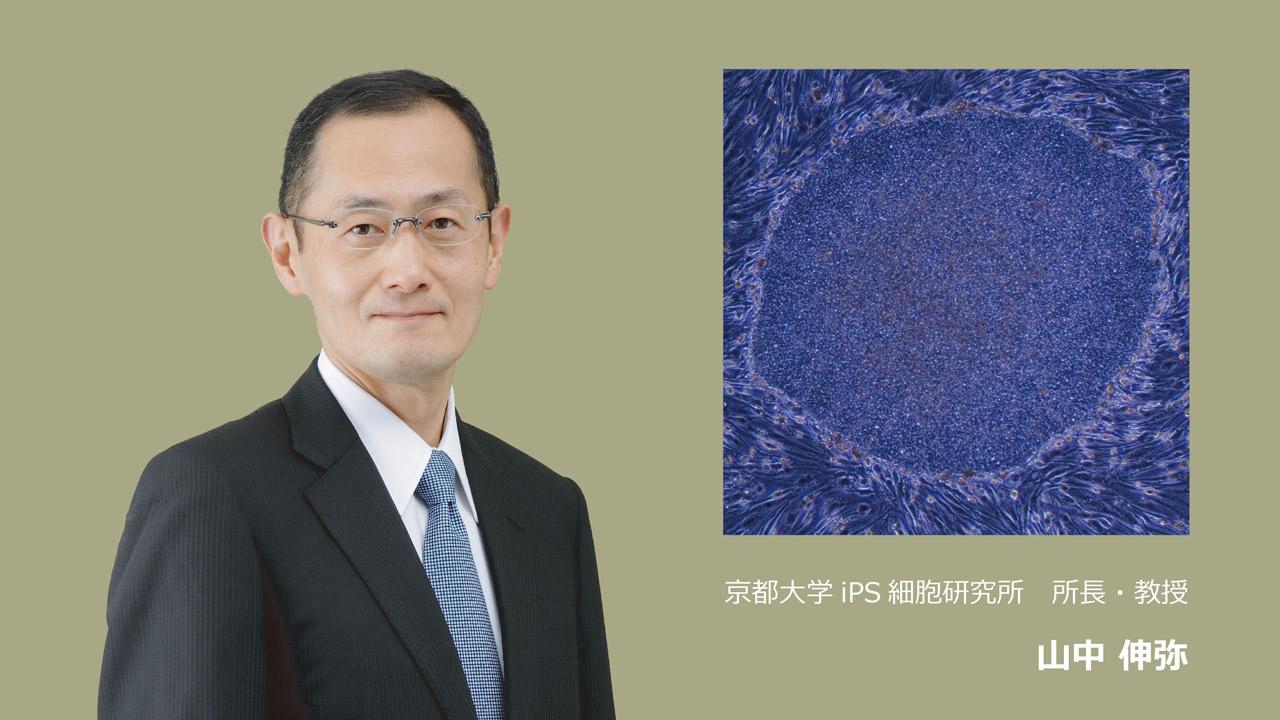 京都大学iPS細胞研究所に安定した研究支援体制を!
