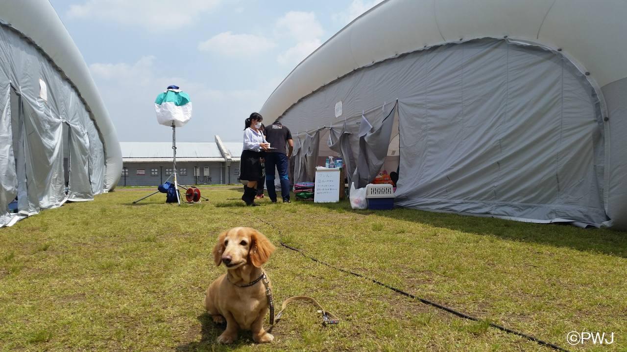 [ペット同伴世帯用の避難所運営にご支援を 熊本地震緊急支援]の画像