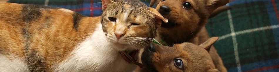 犬や猫のためのライフボート  犬を飼う前に「なぜ、保健所で殺処分されてしまうのか」を考えてみよう。