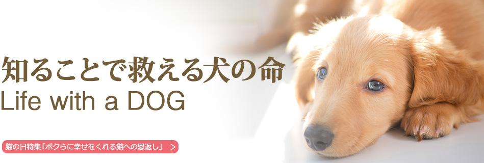 知ることで救える犬の命 Life with a DOG
