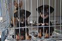 団体の施設では子犬を中心に、沢山の子を保護しています。