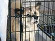 現在でも保護されている被災犬がたくさんいるのです。