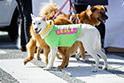日本では住宅事情の関係もあり、大型犬は里親が見つかりにくい。