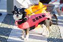 保護犬には純血種も多く存在します。