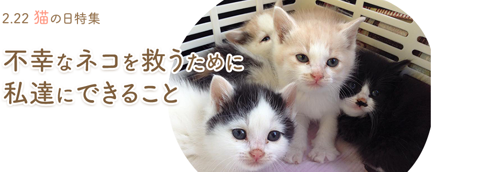 2.22 猫の日特集 不幸なネコを救うために私達にできること